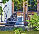 The guardian of the balcony secrets...
