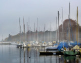Silent foggy morning...