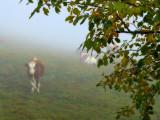 Foggy encounters...