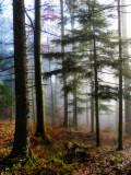 Gentle fight between fog and sun...