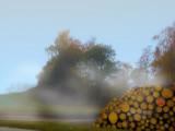 Foggy firewood
