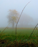 Ground level in the fog