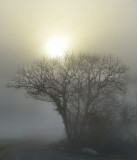 The mystic mystery of the sun in the fog
