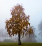 Archetype of haughty tree