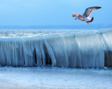 Over the fence of the ice kingdom...