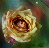 Rose is a rose is a rose is a rose...