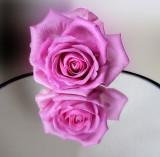 Narcissistic rose…