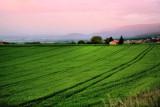 Pastureland at sunrise...