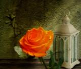 The rose of Scheherazade...