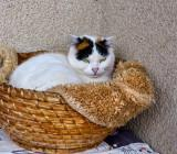 In her basket