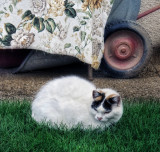 Country cat in the grass...