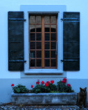The window which liked the blue hour secrets...