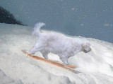 Alice Snowboarding.jpg