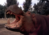 Zoo of Yesteryear
