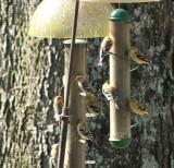 Early 2012 birds