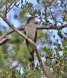 TEXAS SPRING 2011: Birds