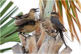 PAIRS_Bird Fight_ClearyC.jpg