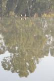 Pairs_MG_Reflections.jpg