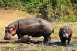 Hippo Family QE Uganda