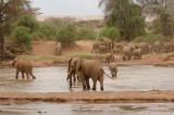 Eles  Samburu 07c.jpg