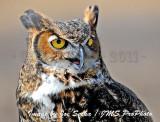 Buzzards Return to Hinkley Reservation Ohio - 03/20/11