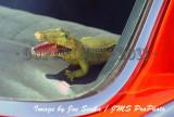 GG-JS-1689-07-09-11.jpg