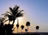 Palmiers du premier matin