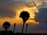 Silhouette des cocotiers