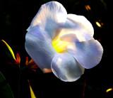 Une fleur au paradis