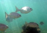 essai de photo sous-marine