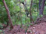 un des cenotes de Chichen Itza