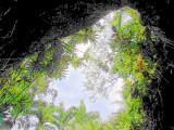 vers le ciel, la jungle trafiquée