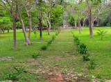 allée du Tumulus près du cenote Ik Kil