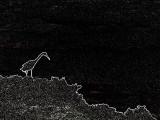 la silhouette du héron