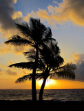 duo de palmiers