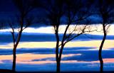 les trois arbres devant le soleil couchant