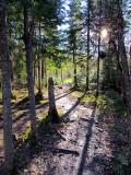 sentier du bois
