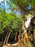 la forêt contre la paroi
