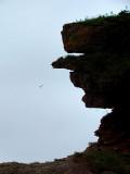 le géant de la baie des Marigots