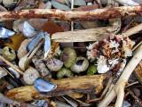 trésors de plage