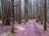 la morte forêt