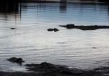 formes à marée basse