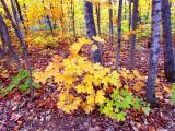 feuilles dautomne