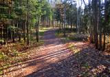 sentier boisé