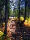 le petit chemin vers la rivière