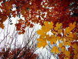 automne bicolore