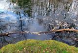 l'état de l'étang en novembre
