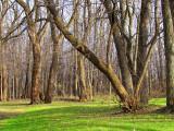 les arbres de domaine