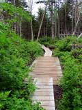 sentier de bois