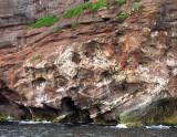 colonie d'oiseaux marins sur la falaise
